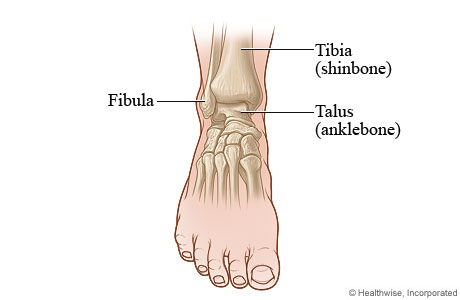 Front view of the ankle