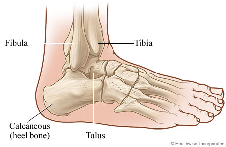 Side view of the ankle