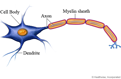 Picture of a neuron