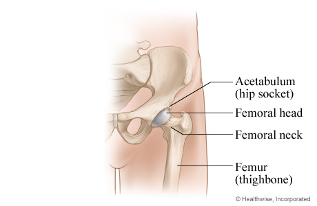 Picture of a normal hip joint