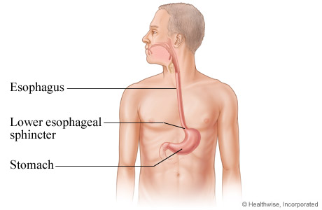 Picture of the esophagus