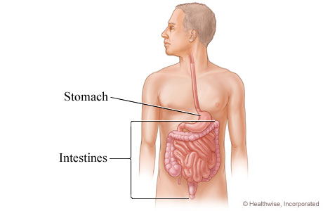 Picture of intestines