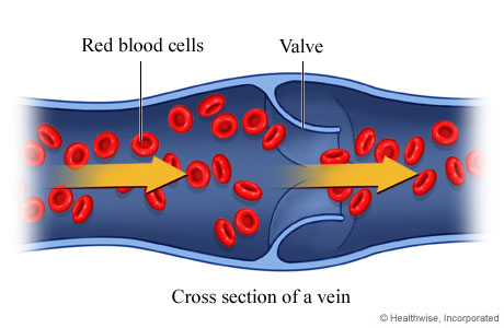 Picture of normal venous blood flow
