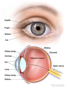 Eye anatomy; two-panel drawing shows the outside and inside of the eye. The top panel shows outside of the eye including the eyelid, pupil, sclera, and iris; the bottom panel shows inside of the eye including the cornea, lens, ciliary body, retina, choroid, optic nerve, and vitreous humor.