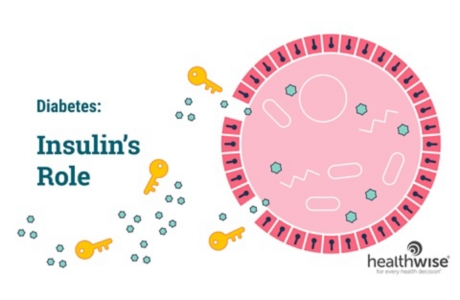 Insulin's Role